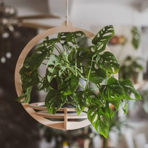 plant hanger - planet small