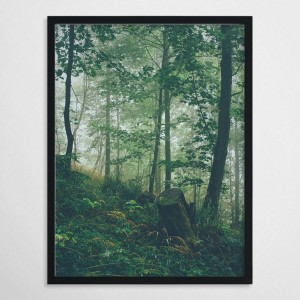 forest IV