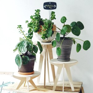 three plant stands SML