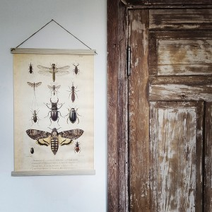 insects - board on canvas