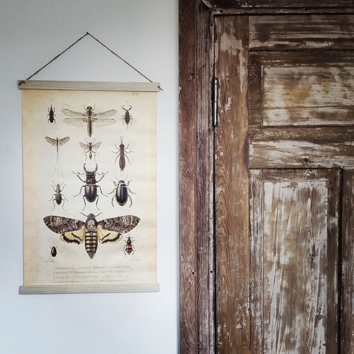 insects board on canvas